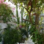 lavender room views